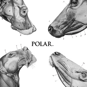 Polar - This Polar Noise Cover