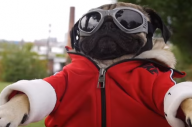 Doug The Pug Is In The New Fall Out Boy Video