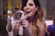 There Are Loads Of Adorable Puppies In The New Echosmith Video