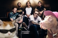 This Is What Neck Deep Look Like As Cats, Dogs And Hamsters