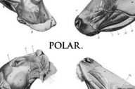 Polar - This Polar Noise