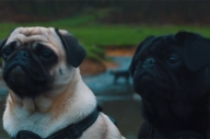 Here's Proof That Music Videos Need More Dogs